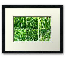 Birch in the Breeze Framed Print