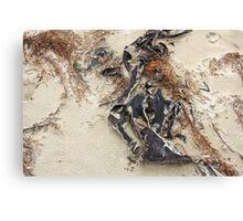 sea sculptures  Canvas Print