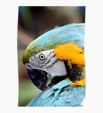 Colorful Nature Poster