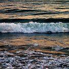 Ocean Beauty by Shaina Lunde