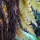 Fern tree detail by Mike Warman
