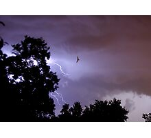 Bug Zapper Photographic Print