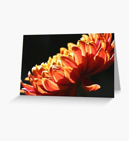 Let the Sun Shine Down on You! Greeting Card
