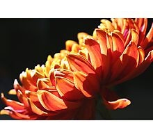 Let the Sun Shine Down on You! Photographic Print