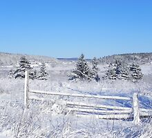 Country Winter by Martha Medford