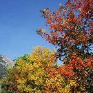 Fall Comes To Oak Glen by CarolM