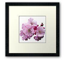 Closeup of Cherry Blossoms Framed Print
