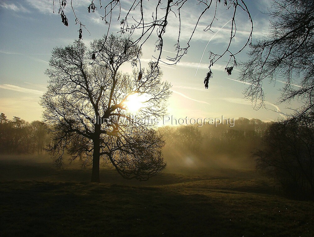 Misty Morning by Colin  Williams Photography