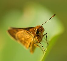 Beauty butterfly by khairusy