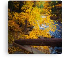 An Autumn Scenic Canvas Print