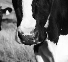 Cow nose by tarnyacox