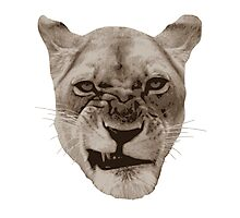 Annoyed Snarling Lion Cat Photographic Print