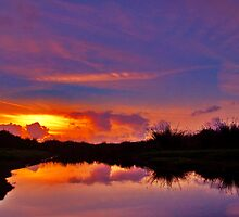 Swamp Sunset by Ray Smith