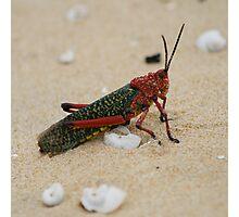 Dune Bug Photographic Print