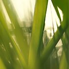Grass abstract 1 by intensivelight