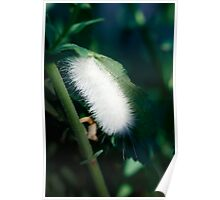 White Fuzzy Caterpillar Poster