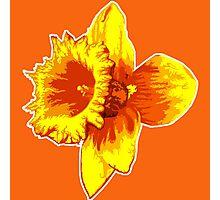 Blood Orange Atomic Daffodil, Fire Flower, Apocalyptic Garden Photographic Print