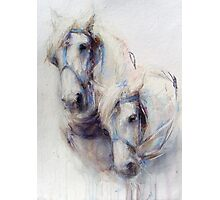 The Boys (harness work horses) Photographic Print