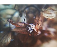 Lonely Snowflake Photographic Print