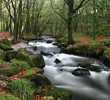 Autumn at Golitha Falls by cwwphotography