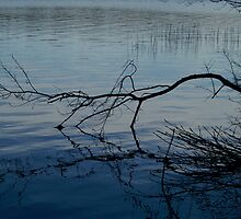 Branch on Water by Gerry Curry