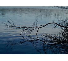 Branch on Water Photographic Print