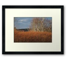 Fall Bamboo Framed Print