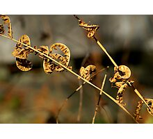Fall Fern Photographic Print