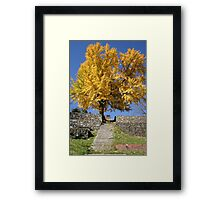 The Ginkgo Tree Framed Print
