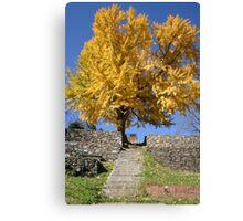 The Ginkgo Tree Canvas Print