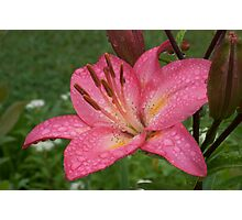 Lilly in the Rain Photographic Print