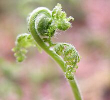 Spring Ostrich Fern by Gerry Curry