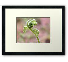 Spring Ostrich Fern Framed Print