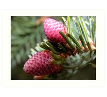 Spring Spruce Cones Art Print