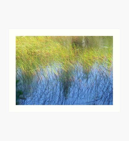 Fall Water Reeds Art Print