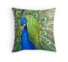 Flirting Peacock   Throw Pillow