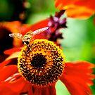 bee bee  by AnaBanana