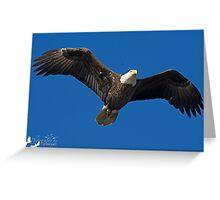 Bald Eagle II Greeting Card