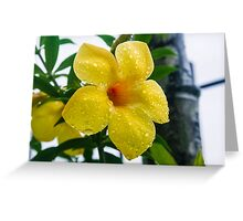Alamanda blossom Greeting Card