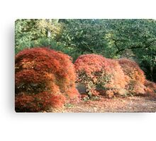 Small Autumn Trees  Canvas Print