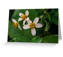 Another Aster Greeting Card