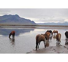 Mountain horse Photographic Print