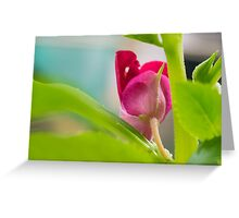 Balsam Greeting Card