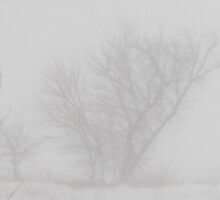Distant tree through the blowing snow by jclegge