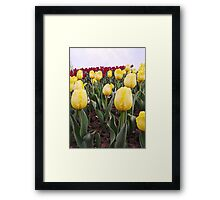 Yellow tulips 3 Framed Print