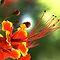 All Vibrant Plants