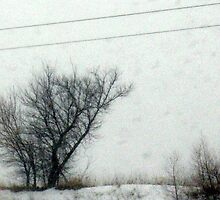 Winter tree through the snow  by jclegge