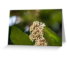 Flowers and Leaves Greeting Card