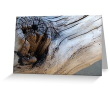 Driftwood Knot Greeting Card