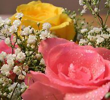 Joyful Roses - 6     ^ by ctheworld